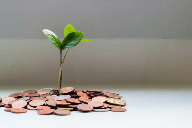´Pequeno monte de moedas e um broto de planta nascendo desse monte.