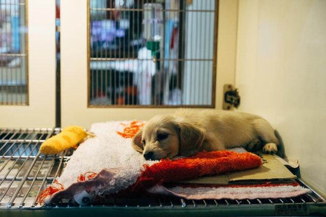 Cachorro deitado sobre uma almofada