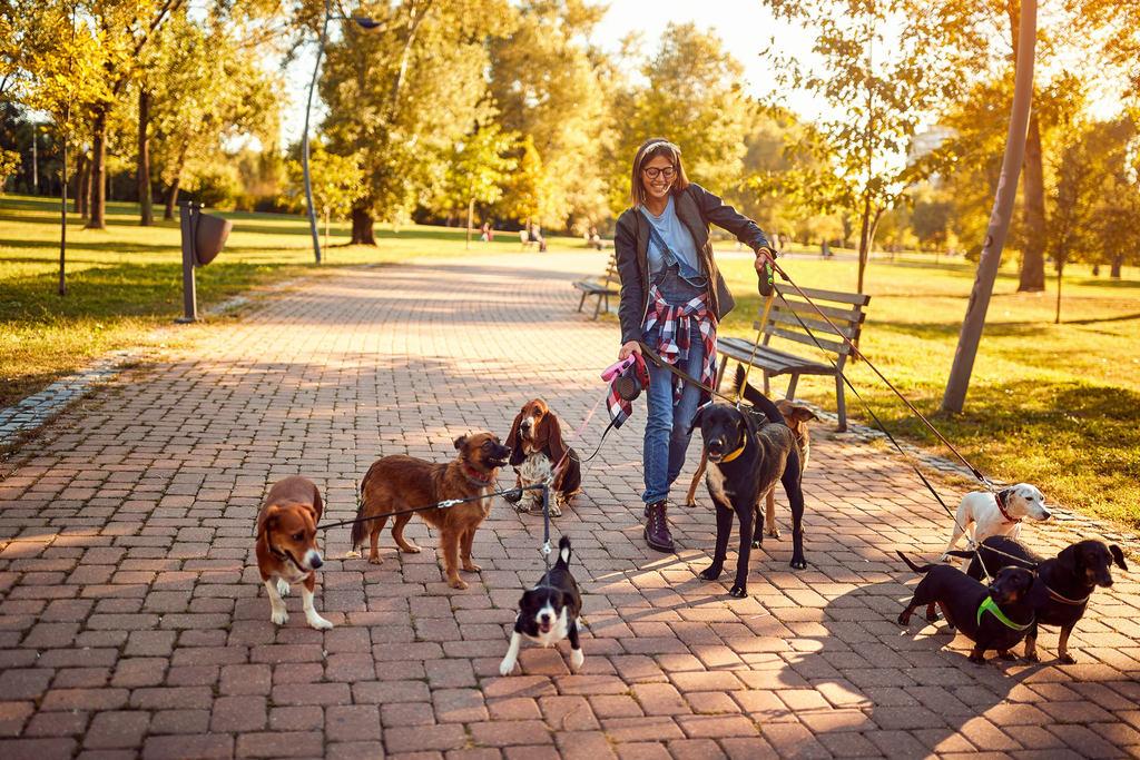 Mulher levando 9 cachorros de raças e tamanhos diferentes para passear